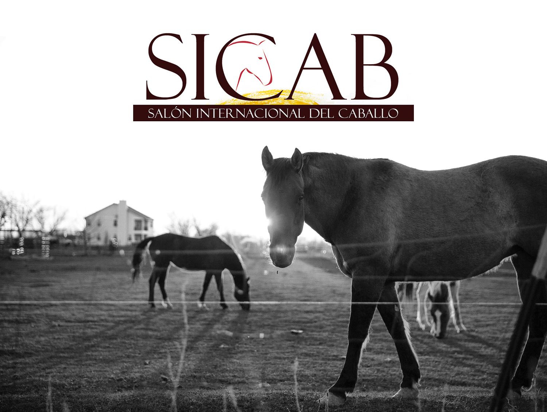 e8640249339 Fotografía publicitaria realizada en Albacete de las tarjetas PVC de la  feria internacional del caballo SICAB ...